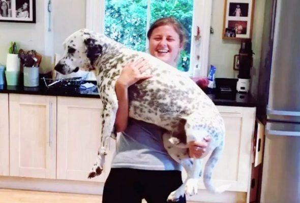Приседай со своей собакой: любители фитнеса запустили новый флешмоб