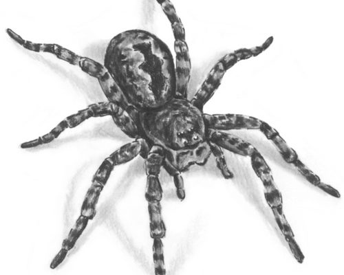 В Индии из уха женщины вытащили живого паука (видео)