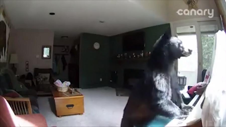 В США медведь забрался в дом и сыграл на пианино (видео)