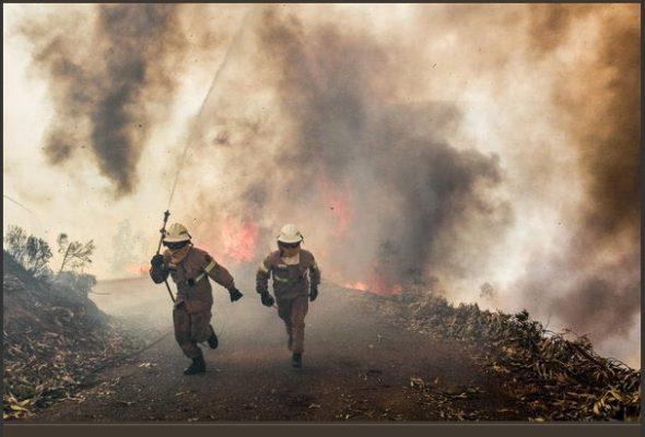 В Португалии 16 человек заживо сгорели в автомобилях, попав в огненную ловушку лесных пожаров