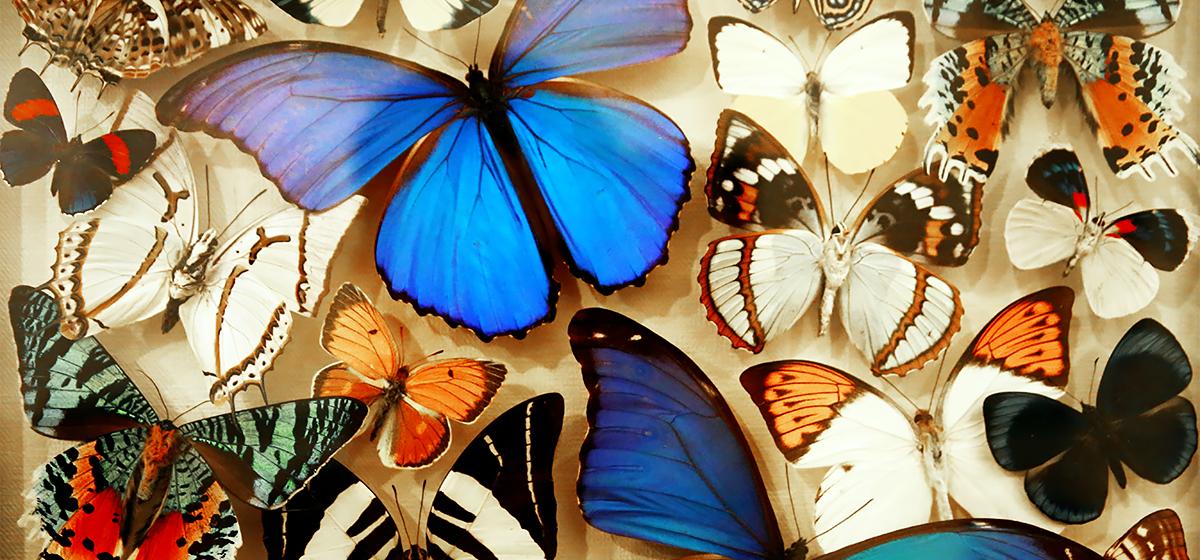 В Барановичах открылась выставка экзотических бабочек