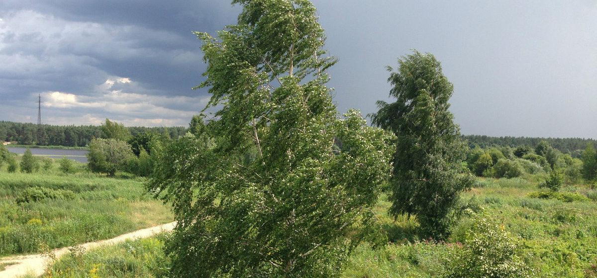 Последствия стихии: ветер ломал деревья, оставлял без света города и поселки