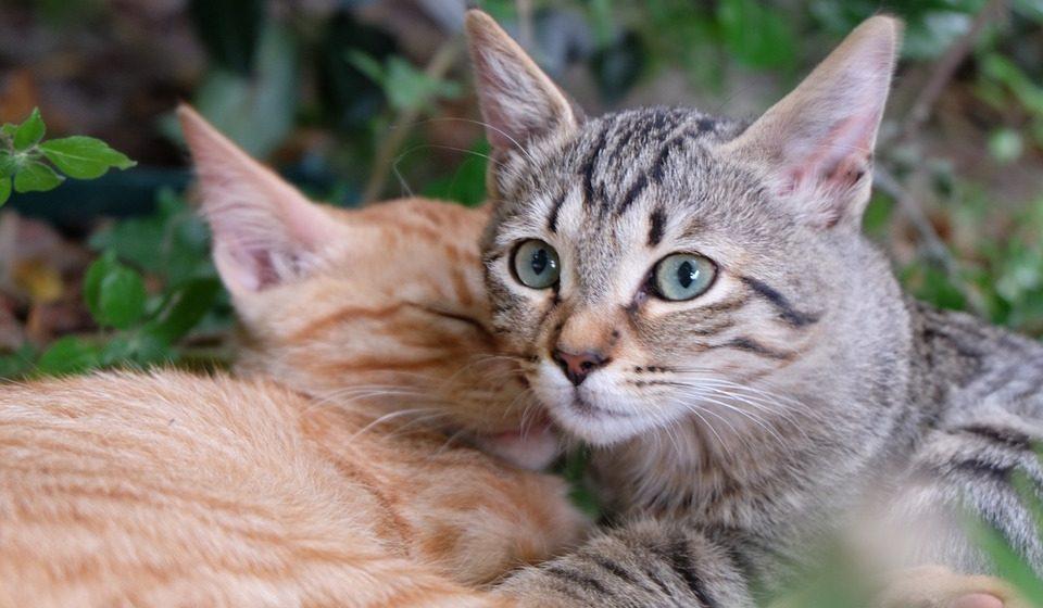 Во Франции более 200 домашних и бездомных кошек отравили неизвестным ядом