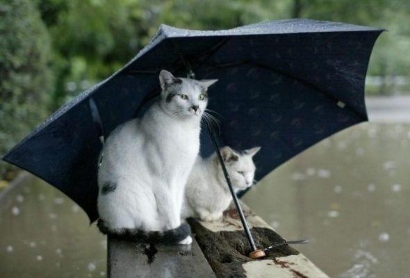 В понедельник, 12 июня, ожидаются кратковременные дожди и грозы