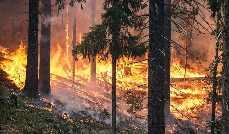 В Чернобыльской зоне на территории Украины начался лесной пожар