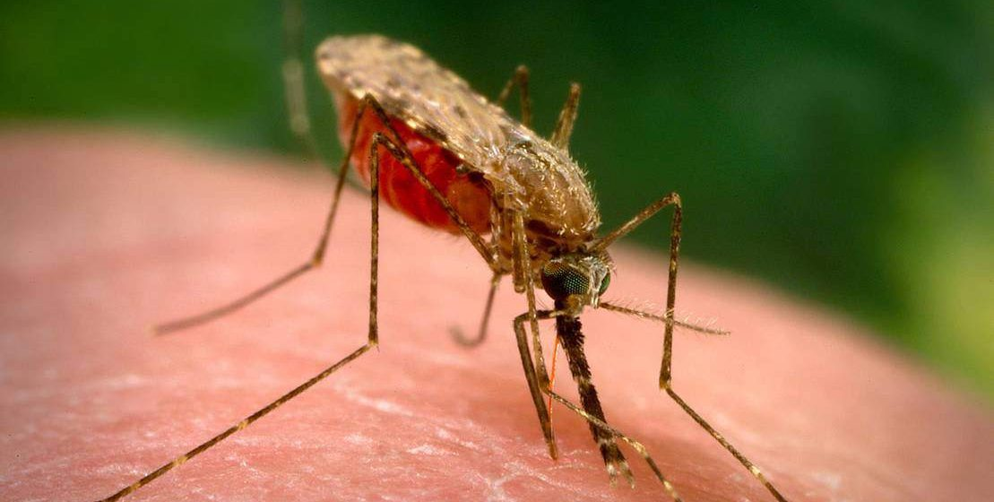 Все, что нужно знать о комарах: почему кусают именно тебя, как стать невкусным для насекомых и избавиться от зуда