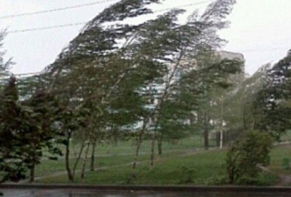 Сильный ветер в обесточил деревни в Барановичском районе