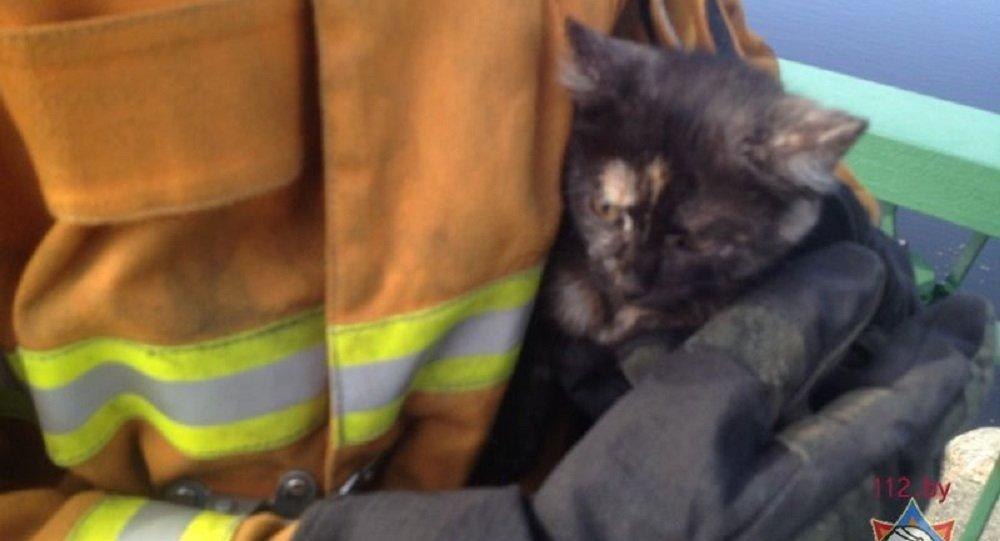 В Пинске спасатели сняли котенка с опоры моста и нашли ему хозяев