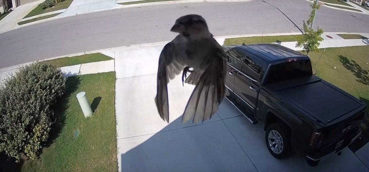 Видеофакт: воробей застыл в воздухе и «левитирует» без помощи крыльев