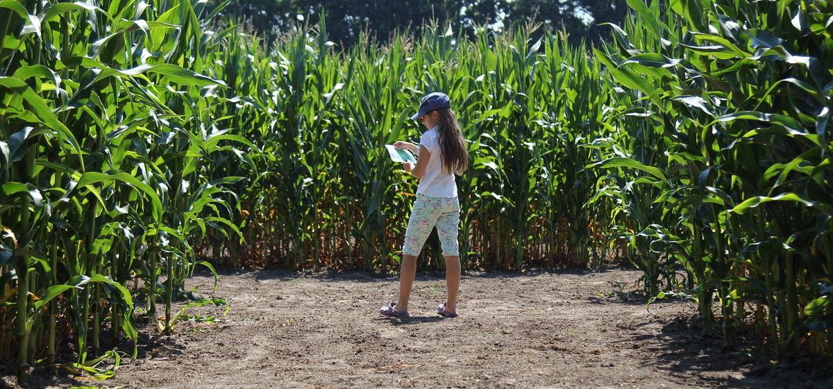 Под Минском откроется первый в Беларуси кукурузный лабиринт