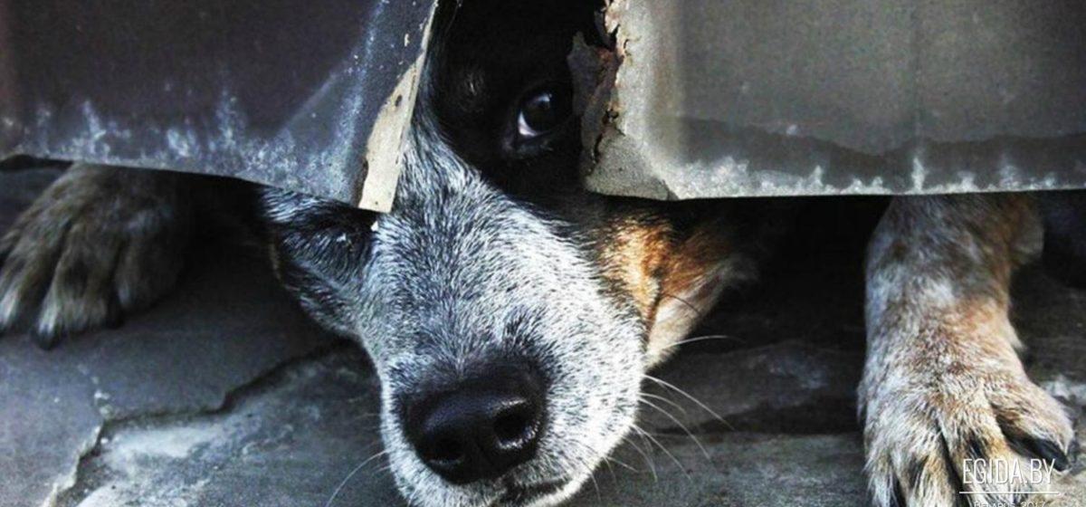Из скотомогильника в Логойском районе спасли живых собак (видео)