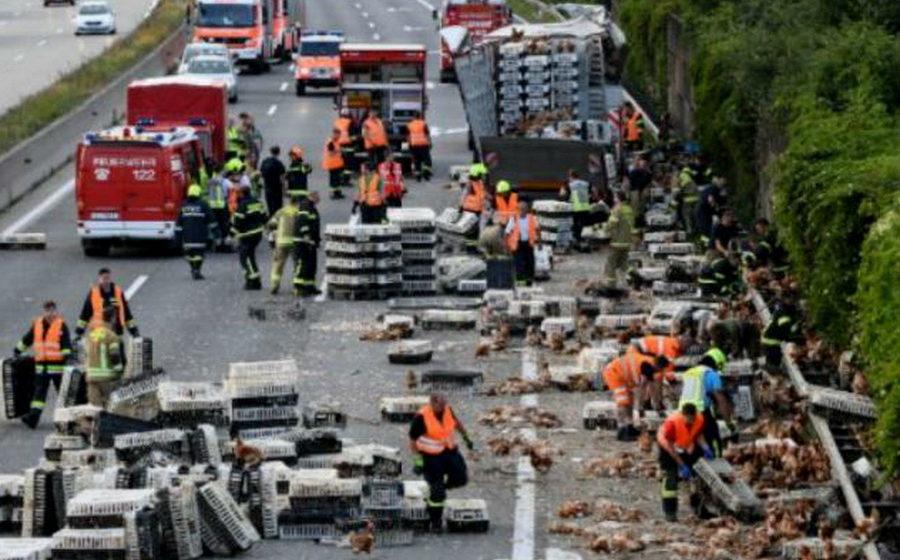 В Австрии из грузовика выпали тысячи кур и заблокировали загруженную трассу (видео)