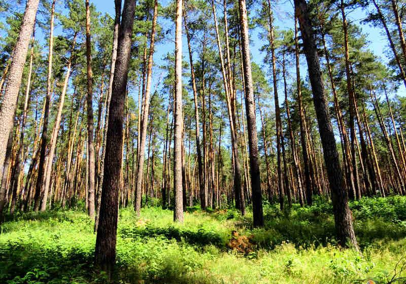 Какие рекомендации следует соблюдать, собираясь в лес