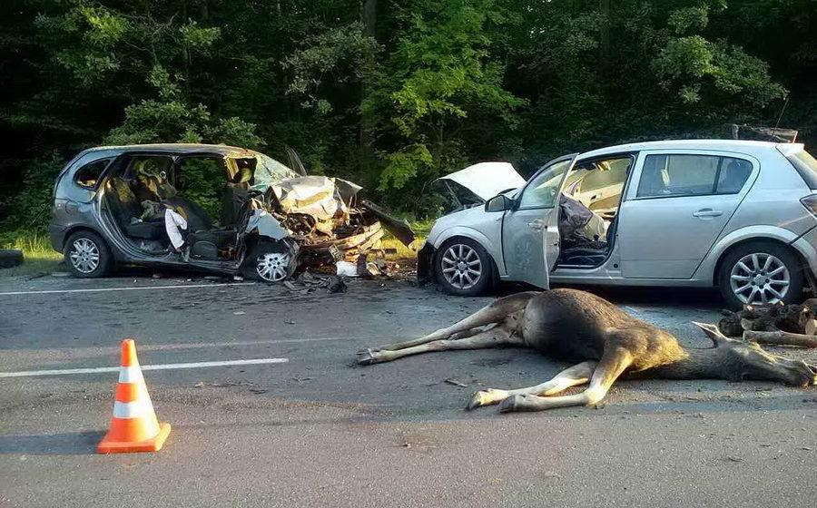 Под Речицей лось спровоцировал ДТП, погиб один человек