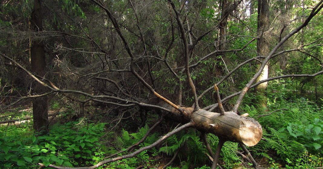 Под Оршей при валке леса погиб 33-летний мужчина