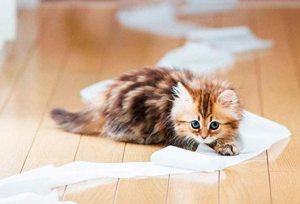 Услуги ветеринарной клиники «ВэллВет»: УЗИ и эндоскопическая стерилизация