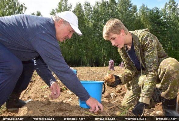 Лукашенко за день собрал 105 тонн картофеля