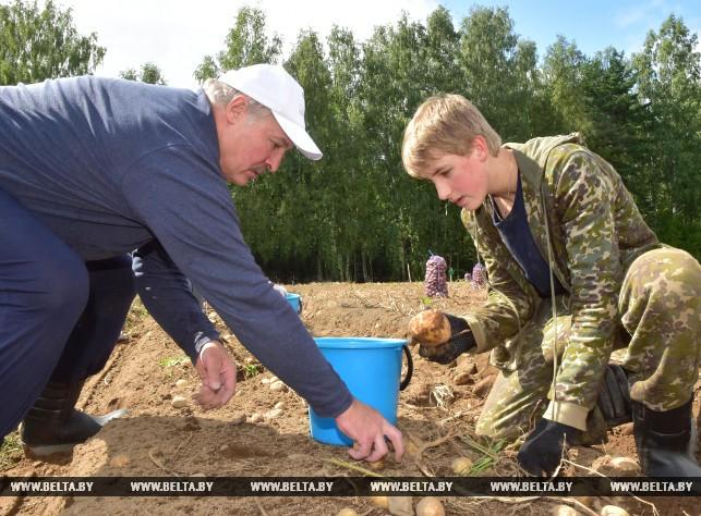 Почему слова Лукашенко о «самой вкусной картошке в мире» – слишком смелые