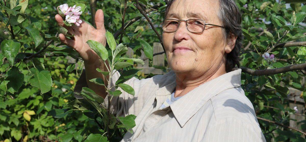 В саду барановичской пенсионерки в августе зацвела яблоня