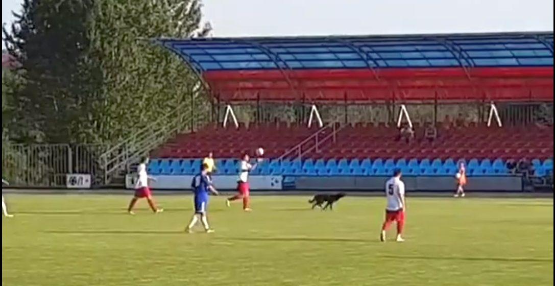 Во время футбольного матча «Сморгонь» – «Барановичи» с поля пришлось удалять собаку (видео)
