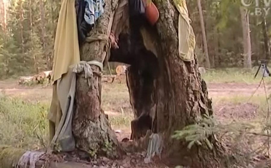 Чудо-сосна в Крупском районе: чтобы забеременеть, женщины трижды пролезают через дупло