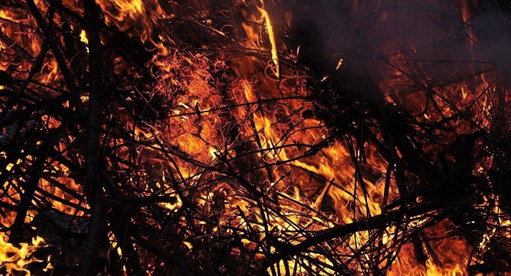Минчанин убил отца-пьяницу, а его тело сжег в лесополосе