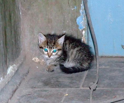 В отношении мужчины, который в Минске на глазах у людей убил котенка, возбудили уголовное дело