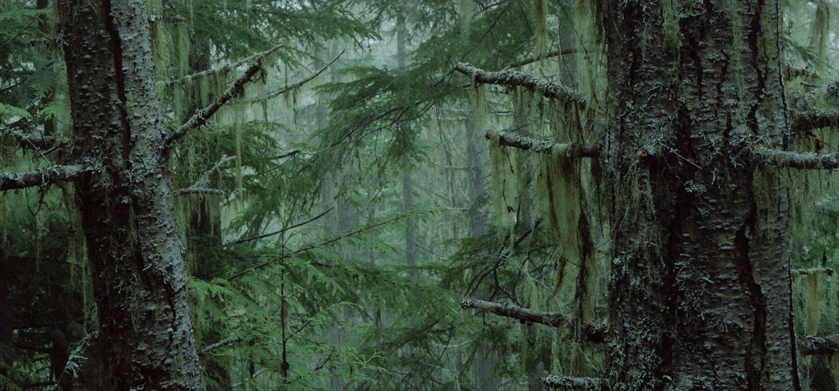 Тест. Сколько дней вы проживете в лесу, пока вас будут искать спасатели?