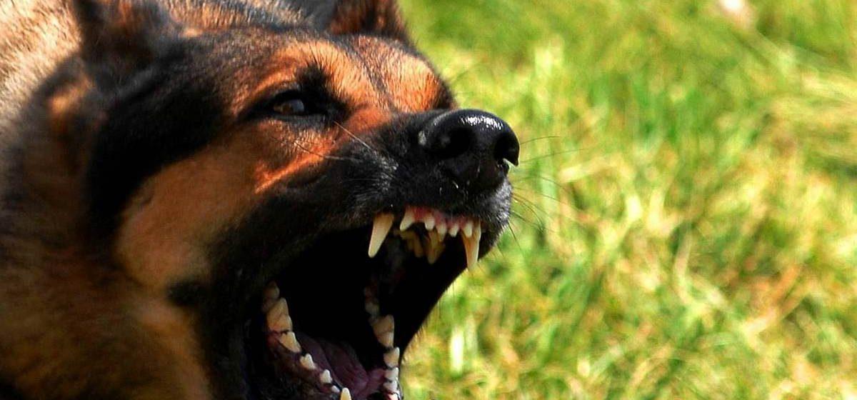 На Витебщине участковый застрелил напавшего на него пса