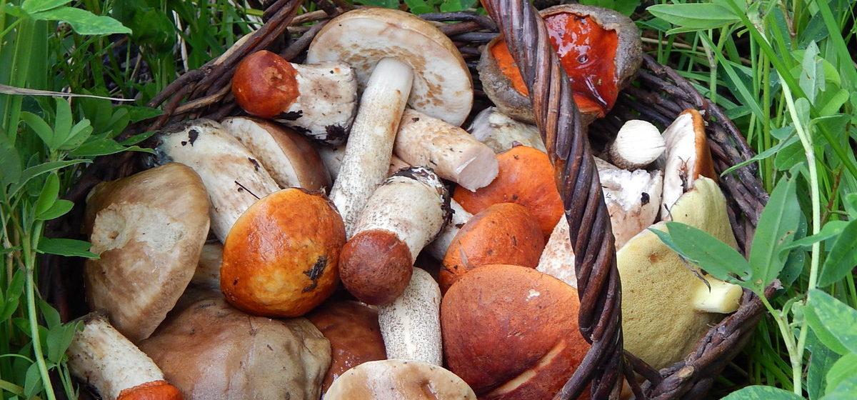 Где в Беларуси растут самые радиоактивные грибы