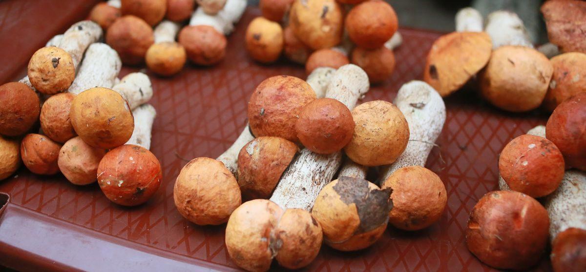Что почем. На барановичских рынках появились брусника и белые грибы