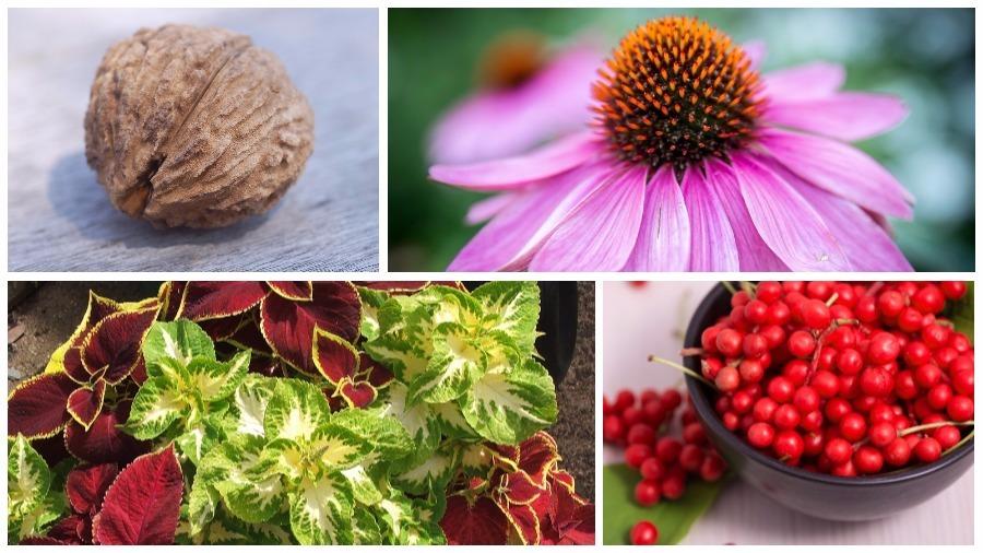 Пятнадцать растений, которые помогают нормализовать работу щитовидной железы
