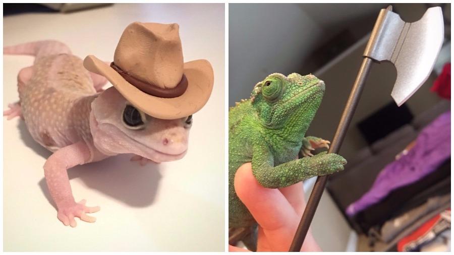 Геккон в ковбойской шляпе и вооруженный хамелеон покорили социальные сети (фото)