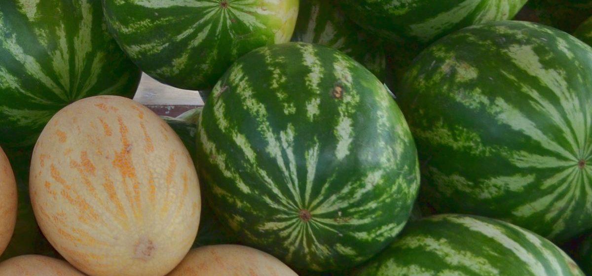 Как выбрать спелый и вкусный арбуз – советы продавцов барановичских рынков