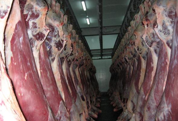 Из «Мерседеса» барановичских бизнесменов изъяли 3500 кг говядины