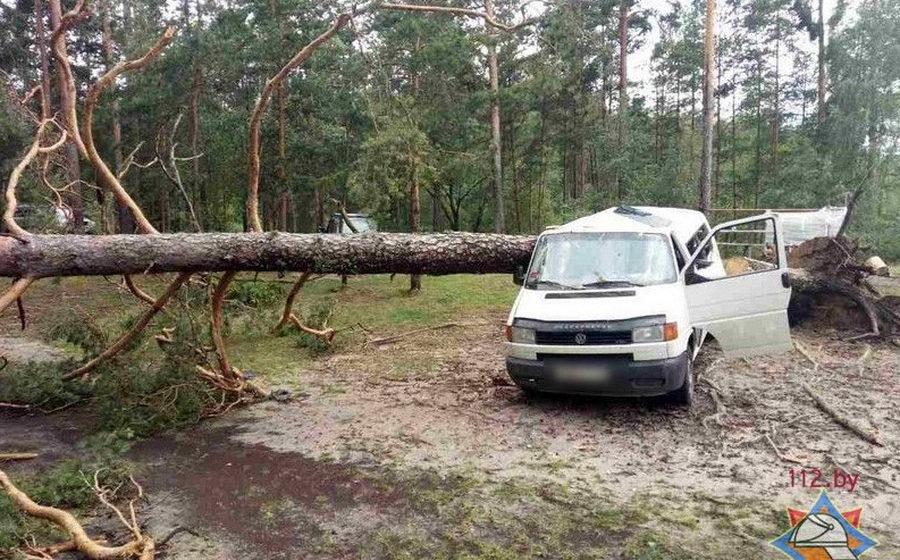 В Вилейском районе на микроавтобус упало дерево, погибла 10-летняя девочка