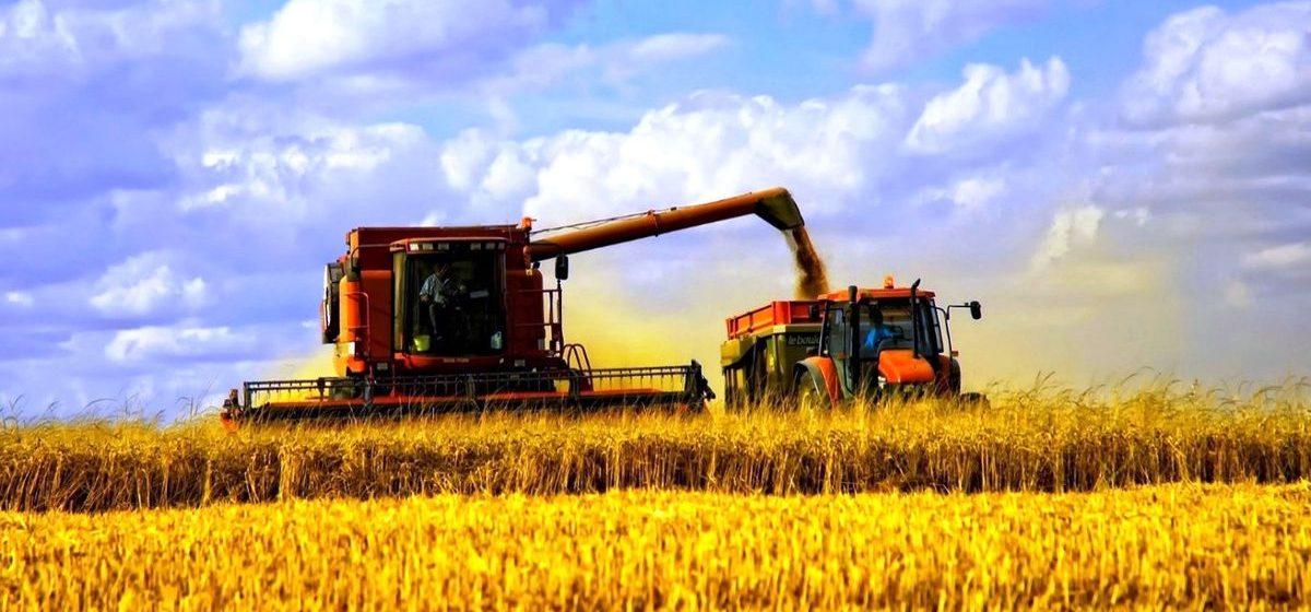 Барановичский район – лидер Брестской области по намолоту зерна