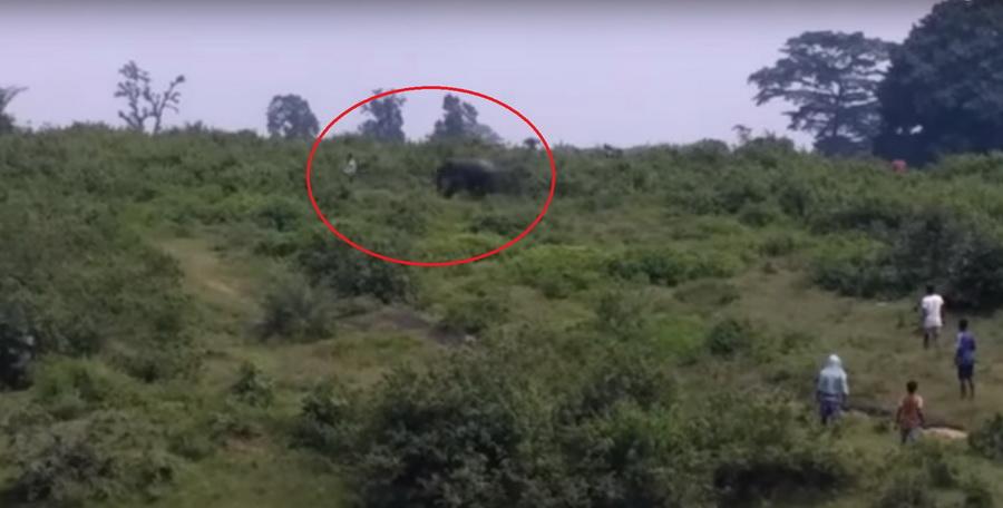 В Индии слон затоптал нетрезвого мужчину, который хотел сделать с ним селфи (видео)