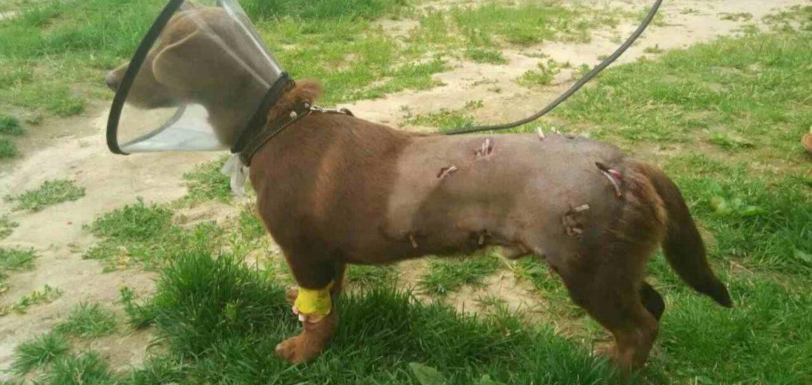 За стрельбу по собаке из пневматики мужчину оштрафовали на 690 рублей
