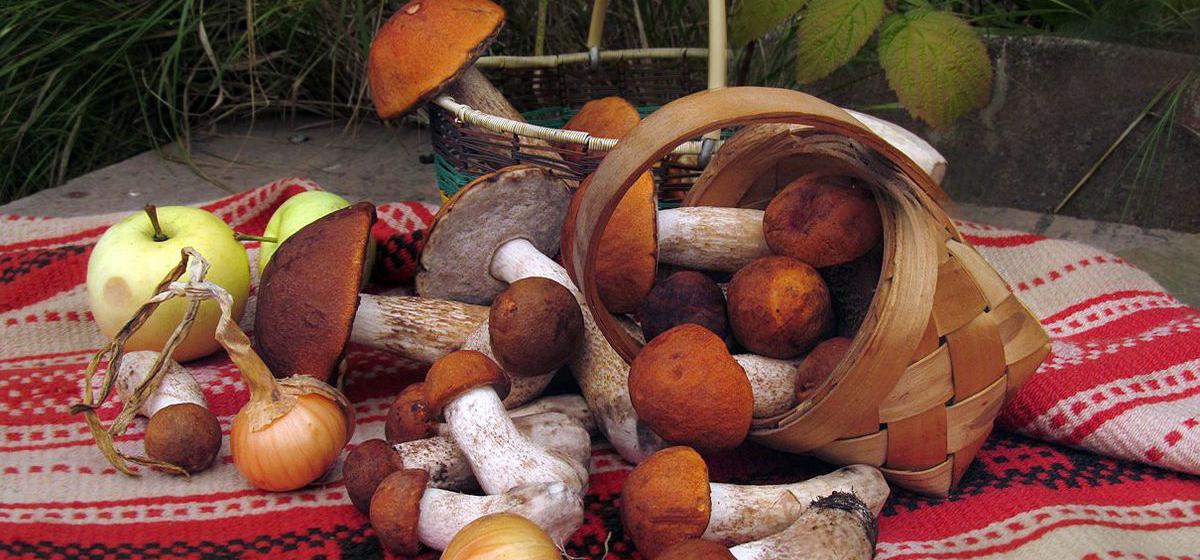 Как приготовить грибы — пять рецептов вкусных блюд