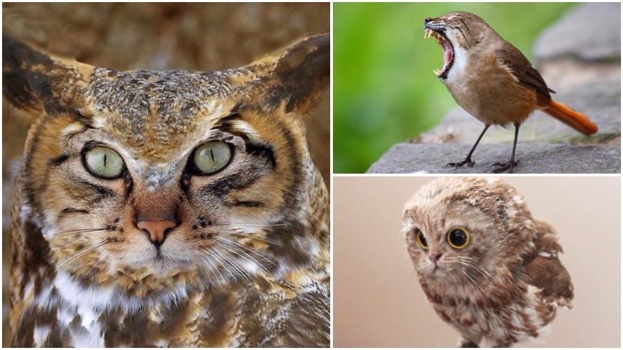 Подборка необычных фотографий гибридов кошек и птиц, выполненных с помощью Photoshop