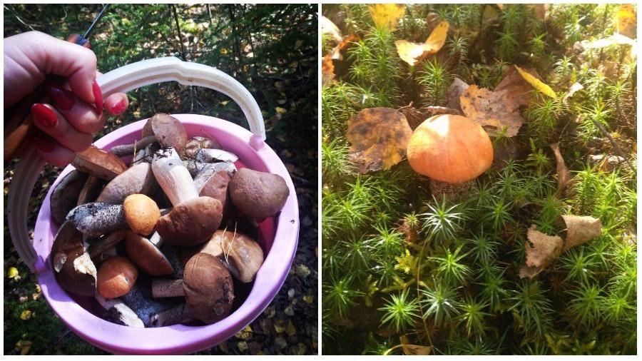Какие штрафы можно получить в Беларуси за сбор грибов с нарушениями