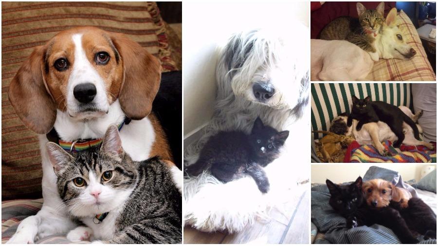 Подборка фотографий кошек и собак, живущих вместе