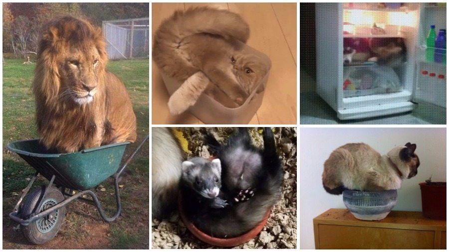 Подборка фотографий животных в самых неудобных местах