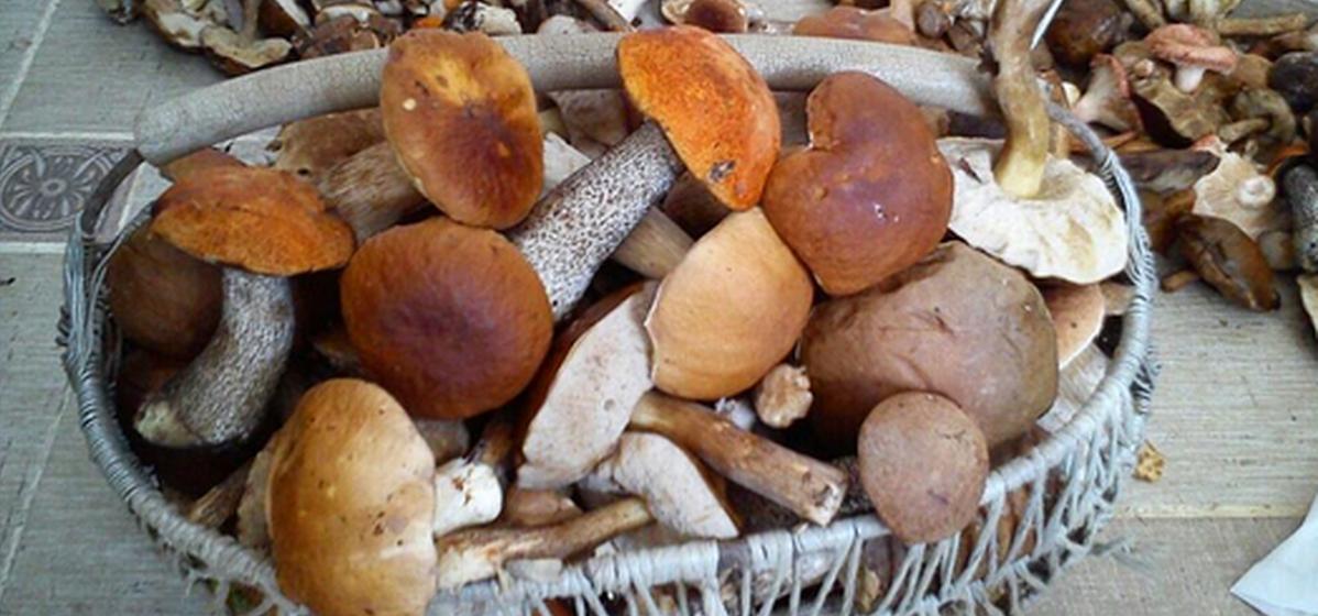 Фотофакт. Семья из Барановичей собрала 50 кг грибов, а сколько собрали вы?
