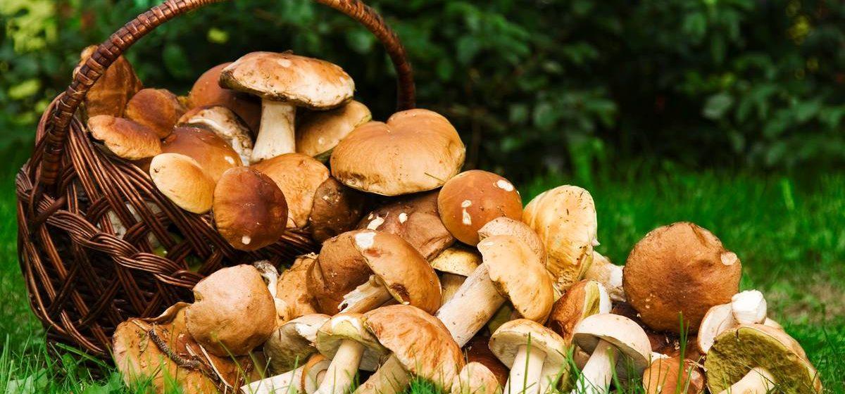 Стало известно, сколько человек отравились грибами в Беларуси с начала года