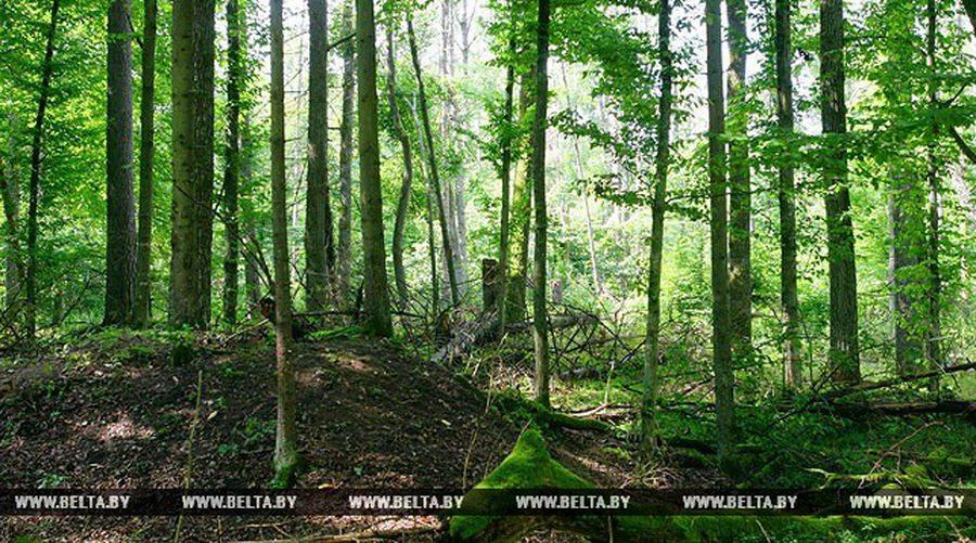 В лесах Ельского района нашли 60-летнего пенсионера, который потерялся три месяца назад