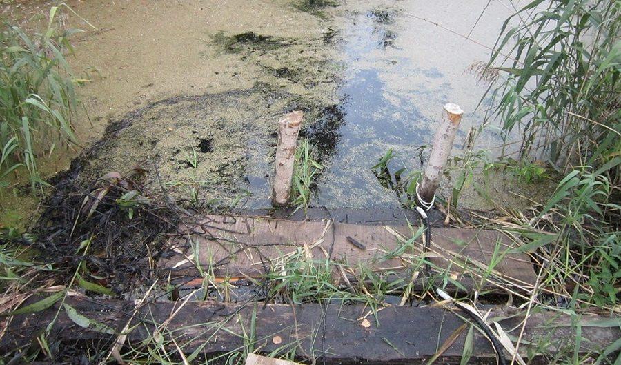 В Глубокском районе в пруду возле дома утонул пятилетний мальчик
