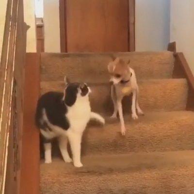 В сети набирает популярность видео, как кот включил у собаки «турборежим»