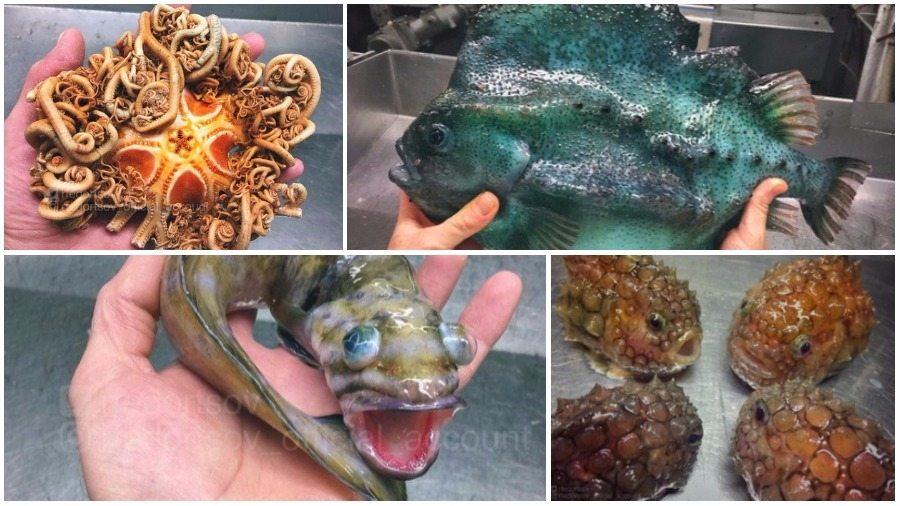 Подборка фотографий глубоководных монстров, которые публикует российский моряк